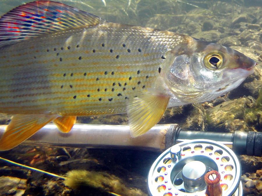 Fotografije ulova, ribe, oprema i dr. - Page 20 Dscn1411