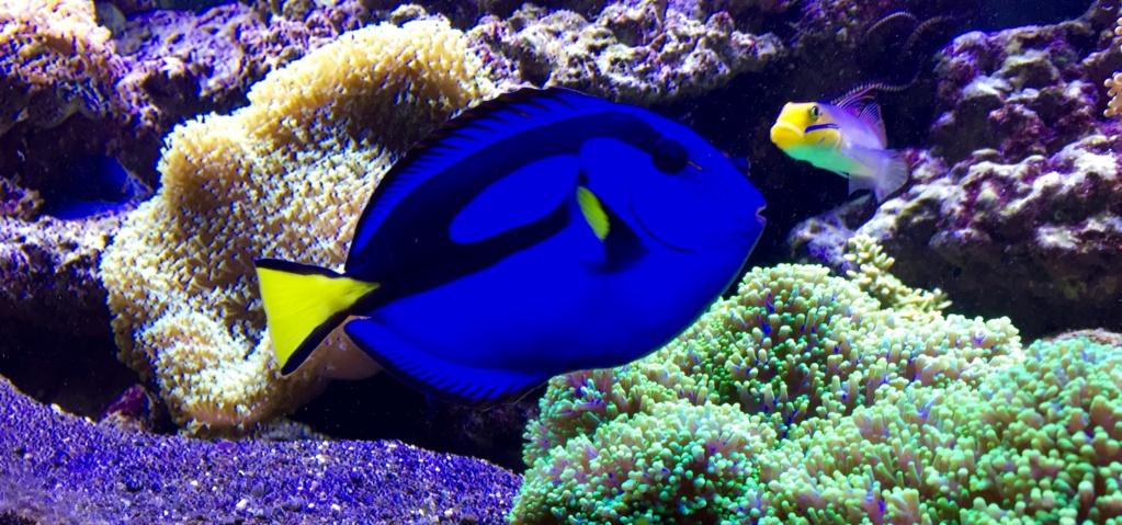photos de poissons et coraux  - Page 2 Fullsi10