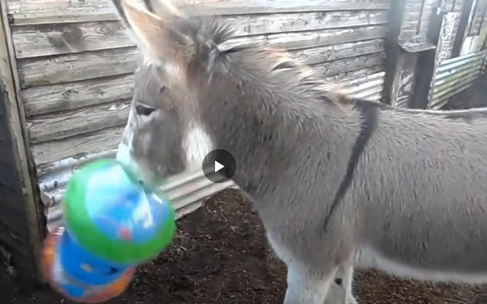 The Donkey's reaction Donkey10