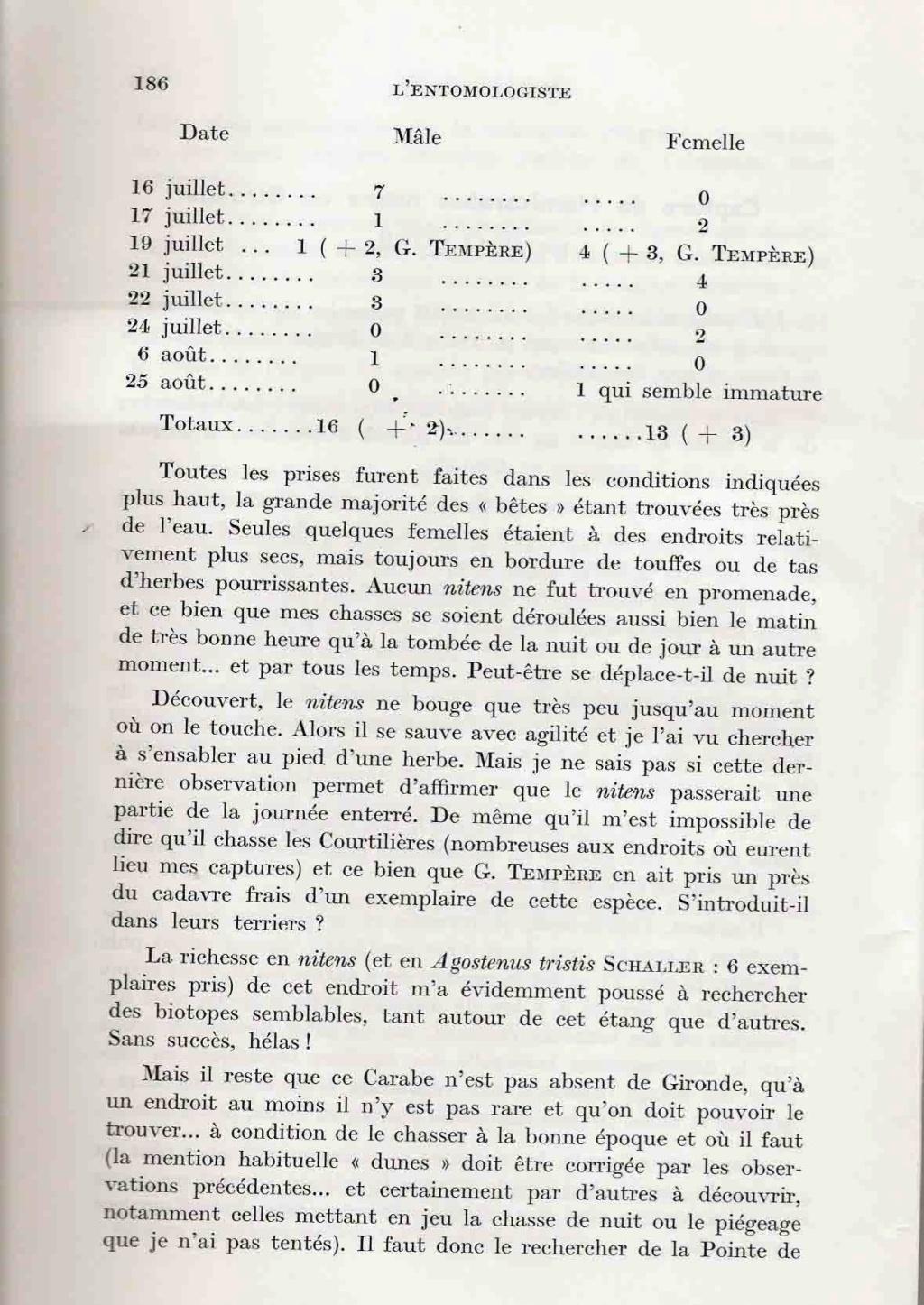 [Carabus (Hemicarabus) nitens nitens], Linné 1758 - Page 2 Clavie13