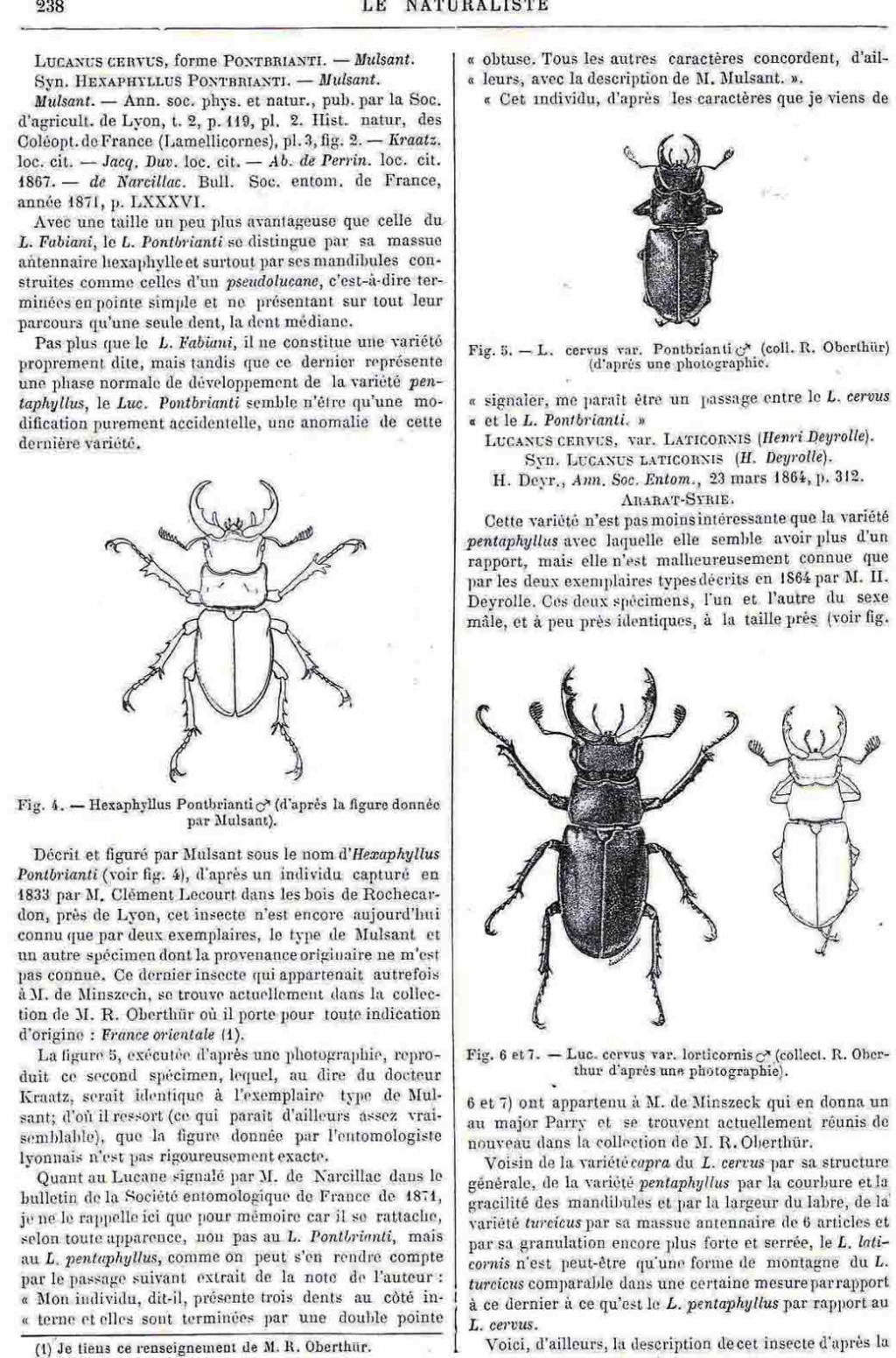 Lucanus tetraodon en Espagne ! Pontbr10