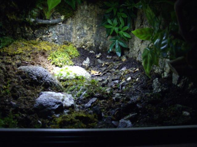 Nouveau terrarium et décor fait maison pour ma Rhino  - Page 3 Imgp0621
