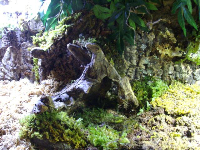 Nouveau terrarium et décor fait maison pour ma Rhino  - Page 3 Imgp0623