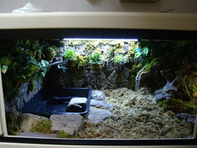 Nouveau terrarium et décor fait maison pour ma Rhino  - Page 3 Imgp0628