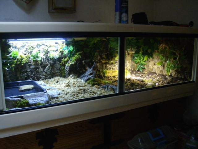 Nouveau terrarium et décor fait maison pour ma Rhino  - Page 3 Imgp0629
