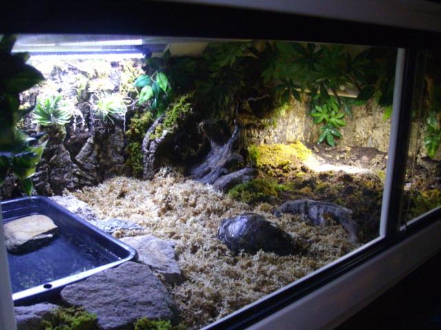 Nouveau terrarium et décor fait maison pour ma Rhino  - Page 3 Imgp0630