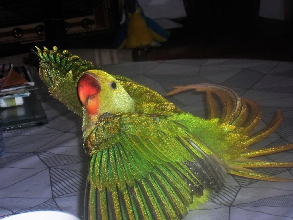 Concours photo n°14: Nos oiseaux prennent le bain  Counco11