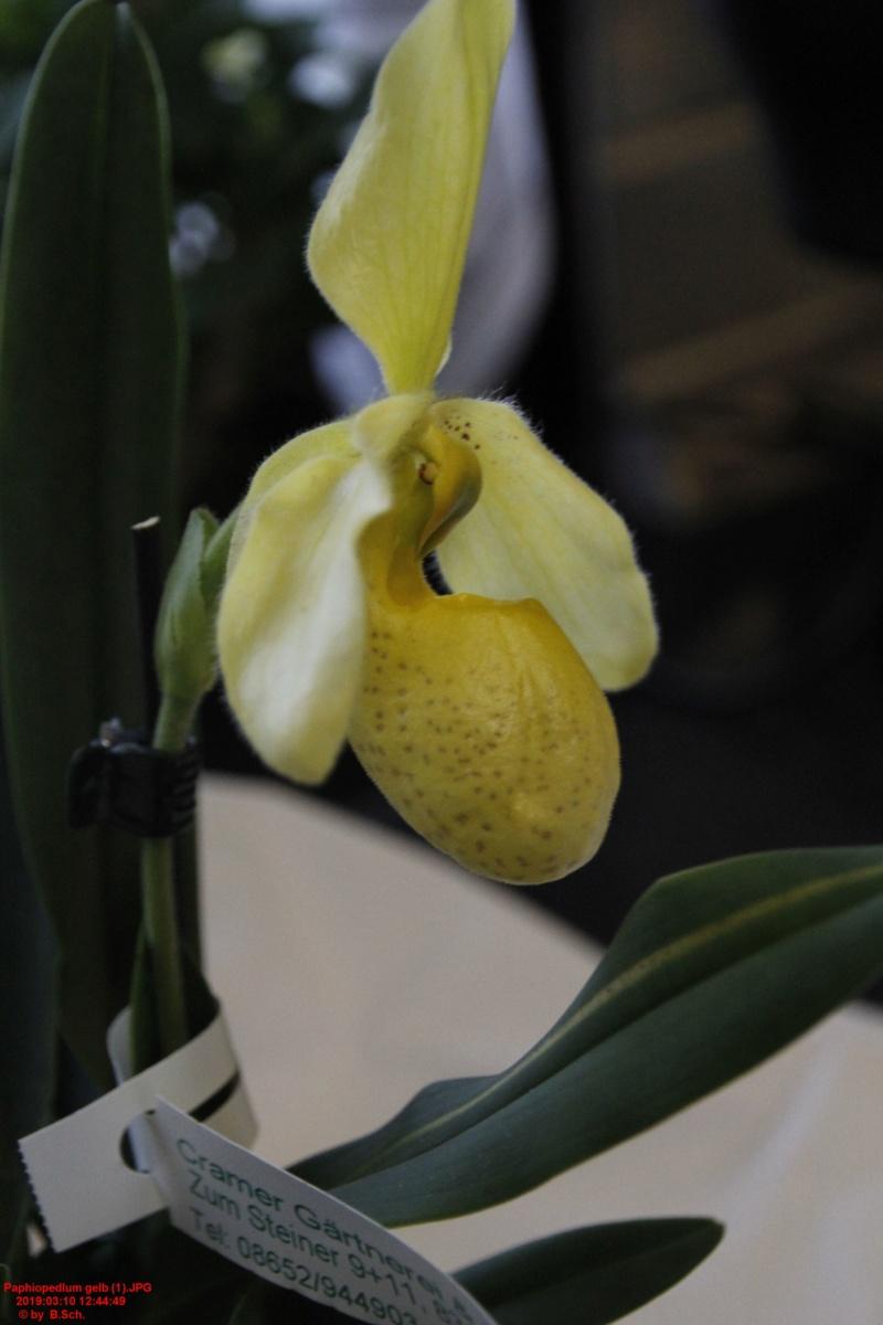 Orchideen-Neuzugang 2 - Seite 18 Paphio10
