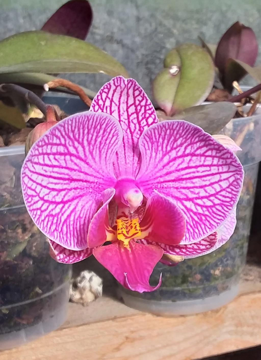 Orchideen 3 (fortlaufende Seiten 300 bis 400) - Seite 57 20190517