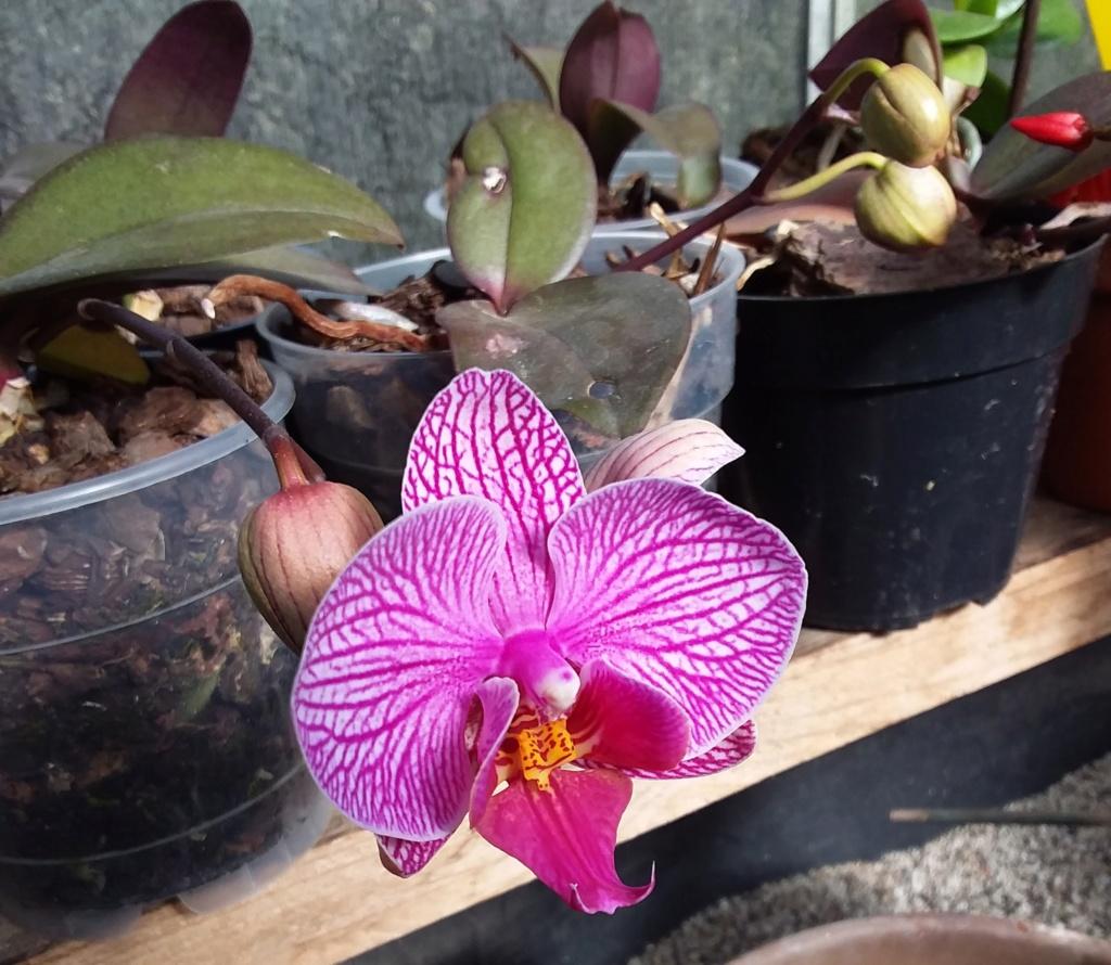 Orchideen 3 (fortlaufende Seiten 300 bis 400) - Seite 57 20190519