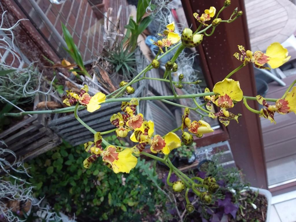 Orchideen 3 (fortlaufende Seiten 300 bis 400) - Seite 64 20200311