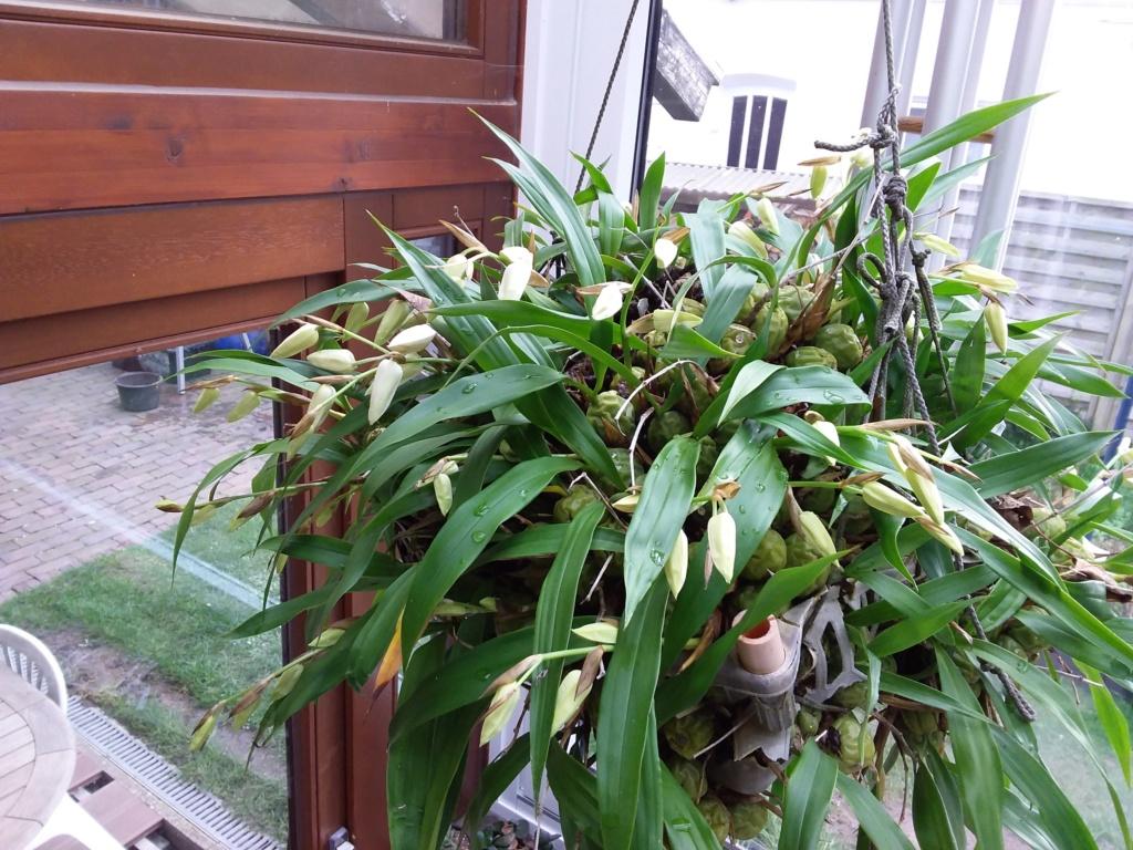 Orchideen 3 (fortlaufende Seiten 300 bis 400) - Seite 64 20200317