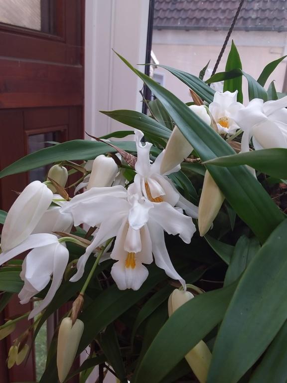 Orchideen 3 (fortlaufende Seiten 300 bis 400) - Seite 64 20200319