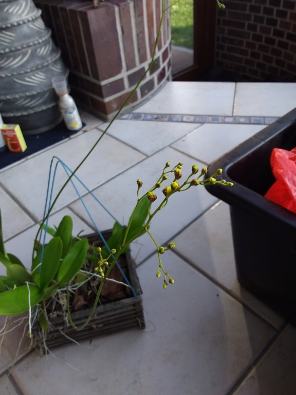 Orchideen 3 (fortlaufende Seiten 300 bis 400) - Seite 65 20200321