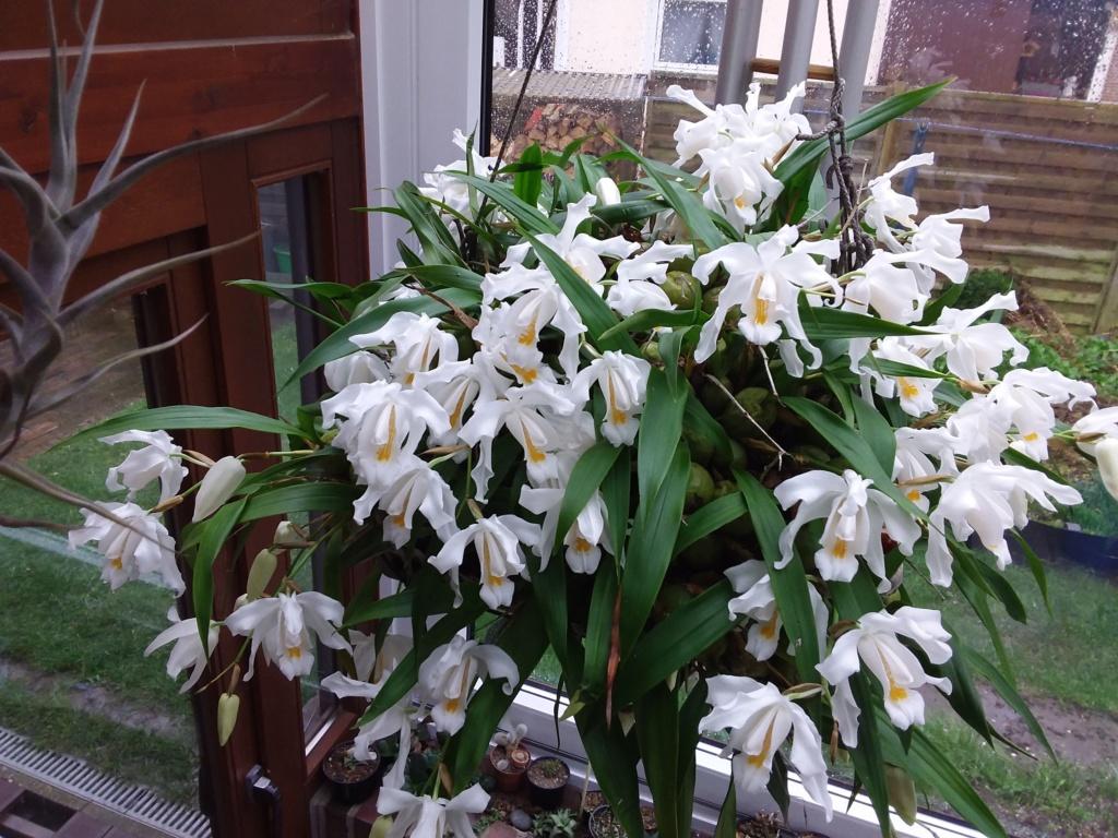 Orchideen 3 (fortlaufende Seiten 300 bis 400) - Seite 65 20200331
