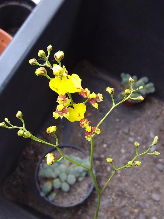 Orchideen 3 (fortlaufende Seiten 300 bis 400) - Seite 67 20200353