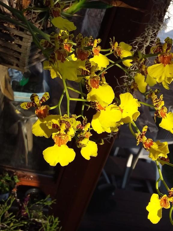 Orchideen 3 (fortlaufende Seiten 300 bis 400) - Seite 67 20200354