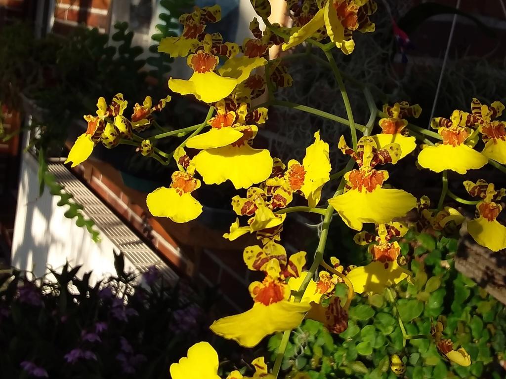Orchideen 3 (fortlaufende Seiten 300 bis 400) - Seite 67 20200355