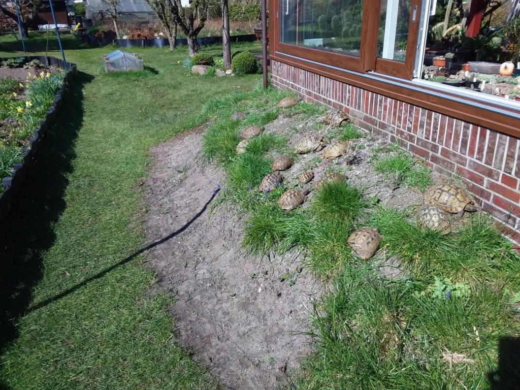 Erste Frühlingsboten im Garten und in Wald und Flur - Seite 93 20200427