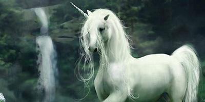 Les esprits de la nature Licorn10