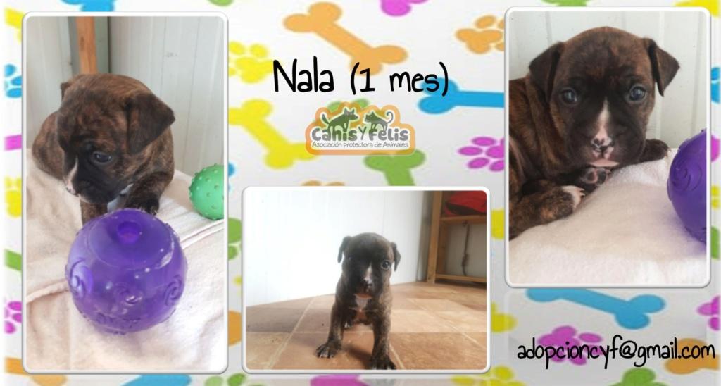 Frida zwanger achtergelaten bij de poort van Canis y Felis 67422210