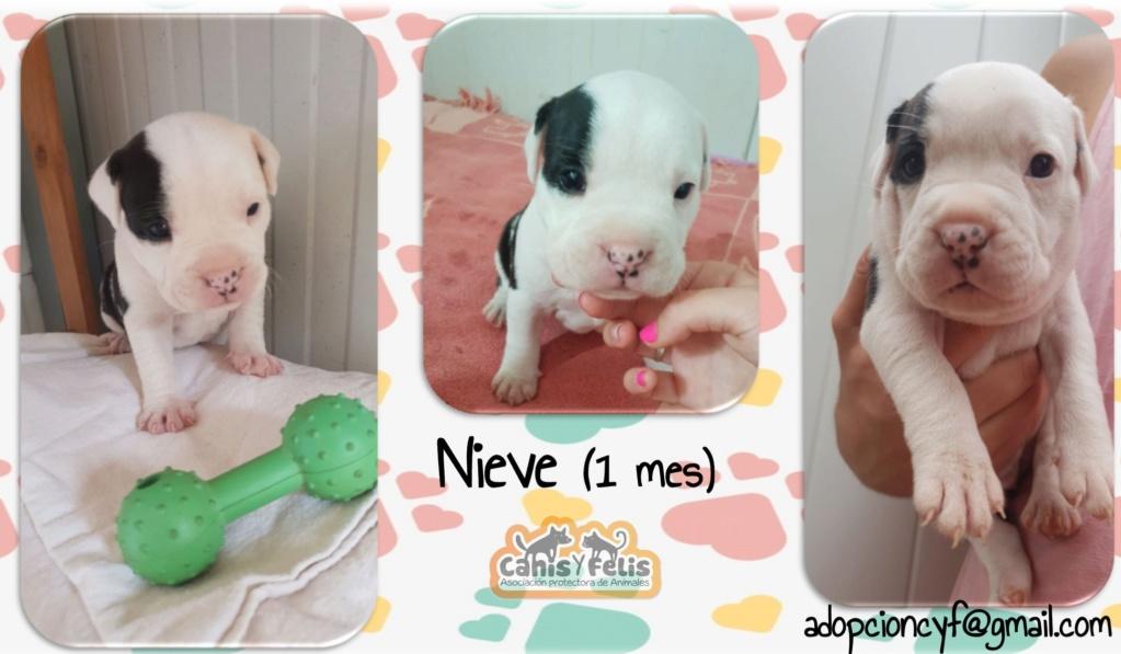 Frida zwanger achtergelaten bij de poort van Canis y Felis 67591910