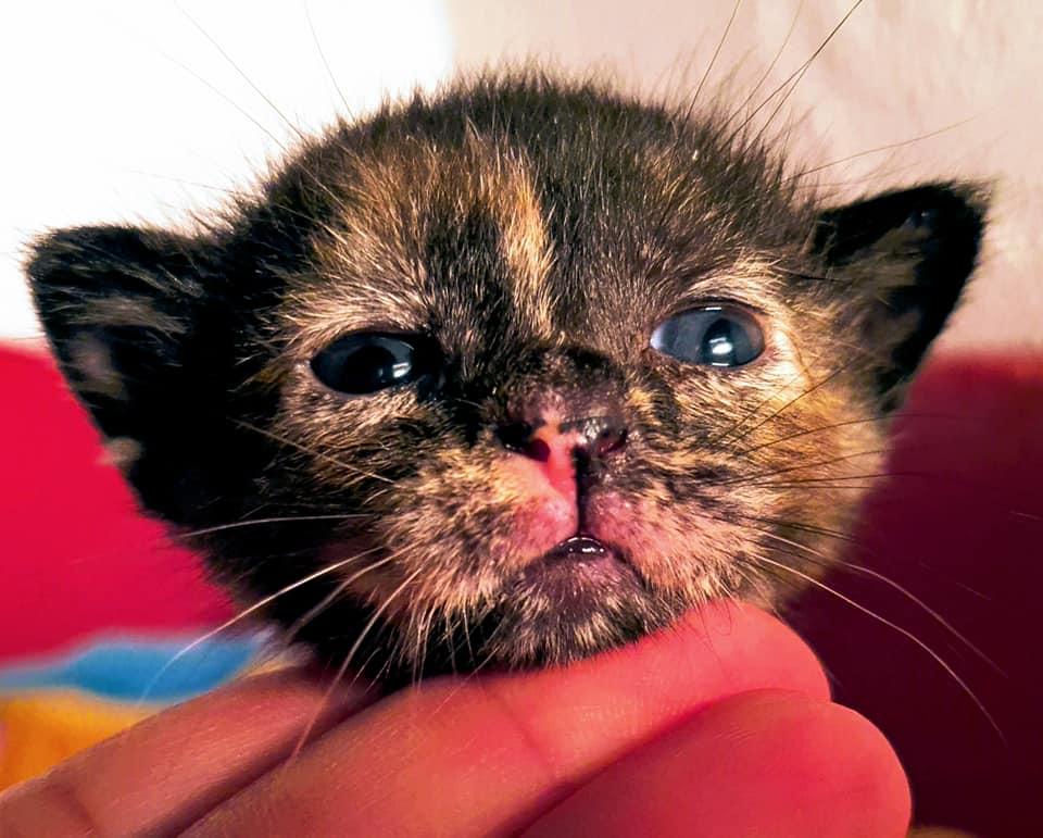 Doos met 4 kittens in een veld achtergelaten 95138410