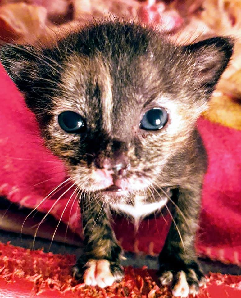 Doos met 4 kittens in een veld achtergelaten 95264010