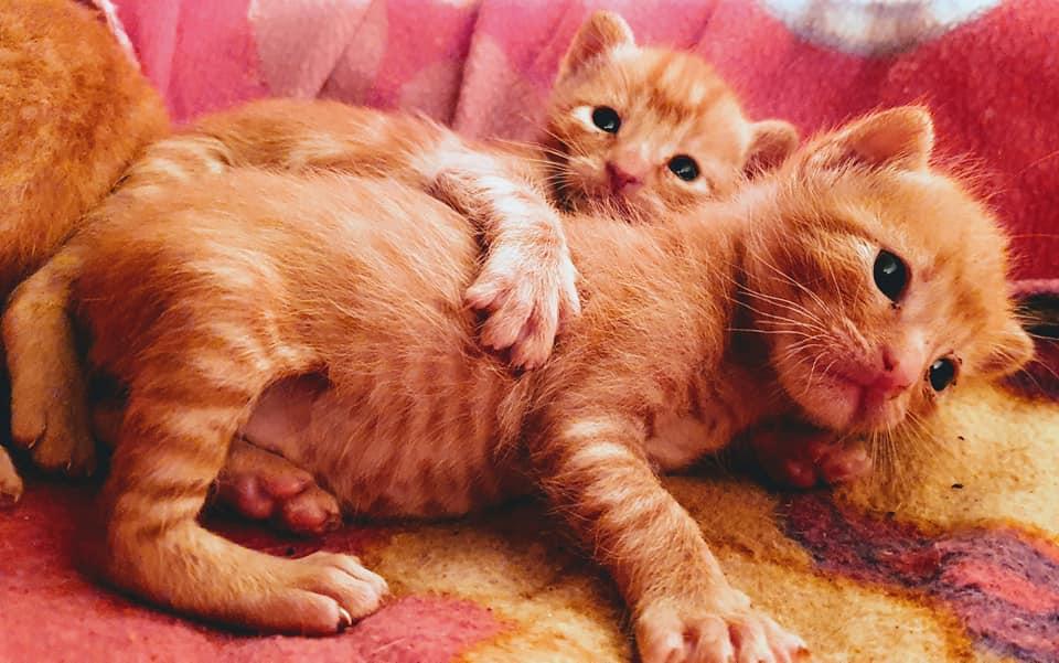 Doos met 4 kittens in een veld achtergelaten 95341610