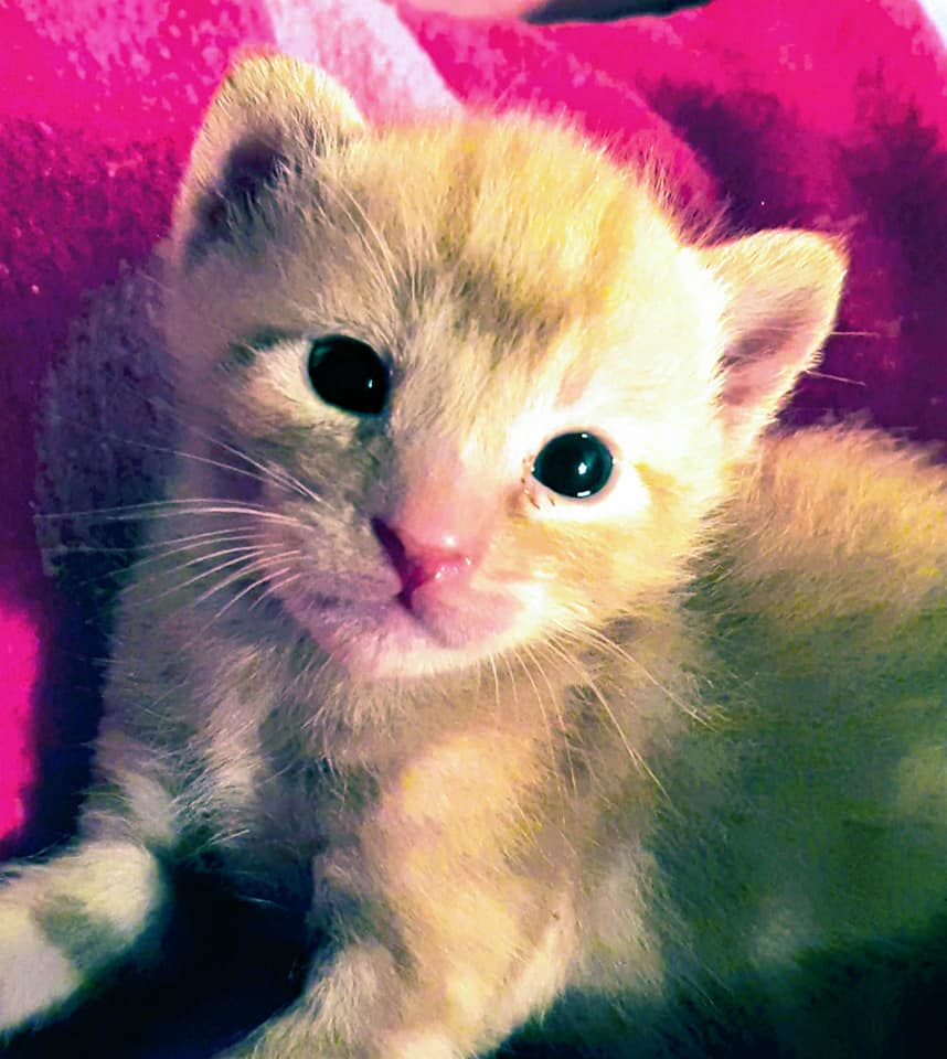 Doos met 4 kittens in een veld achtergelaten 95567710
