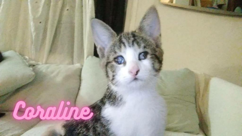 5 kittens Corali10