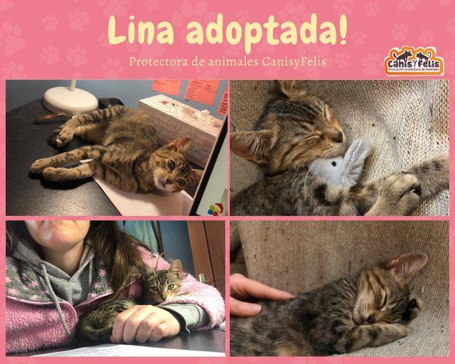 CA Lina Geadop10