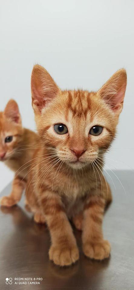Doos met 4 kittens in een veld achtergelaten Kit10