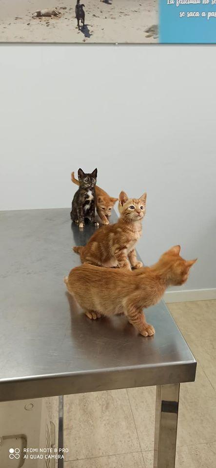 Doos met 4 kittens in een veld achtergelaten Kit510