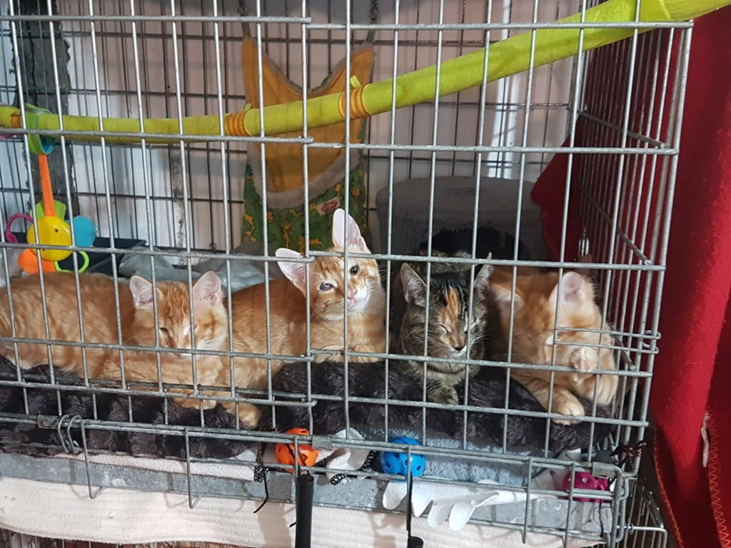 Kittens gedumpt in een zak Kitten14