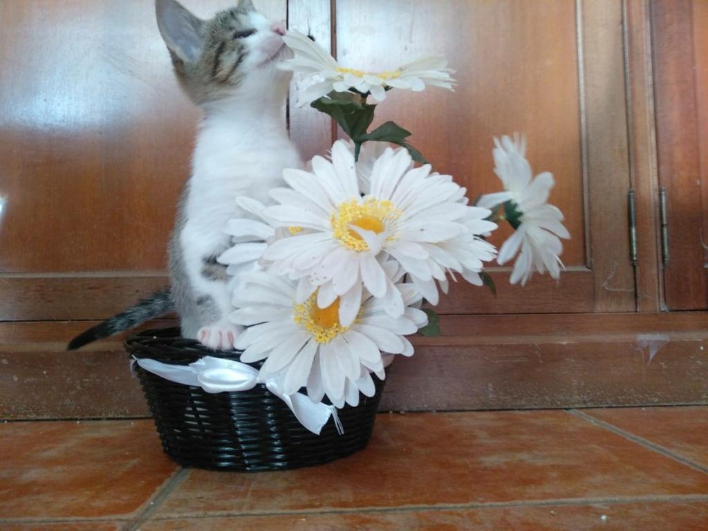 5 kittens Klein10