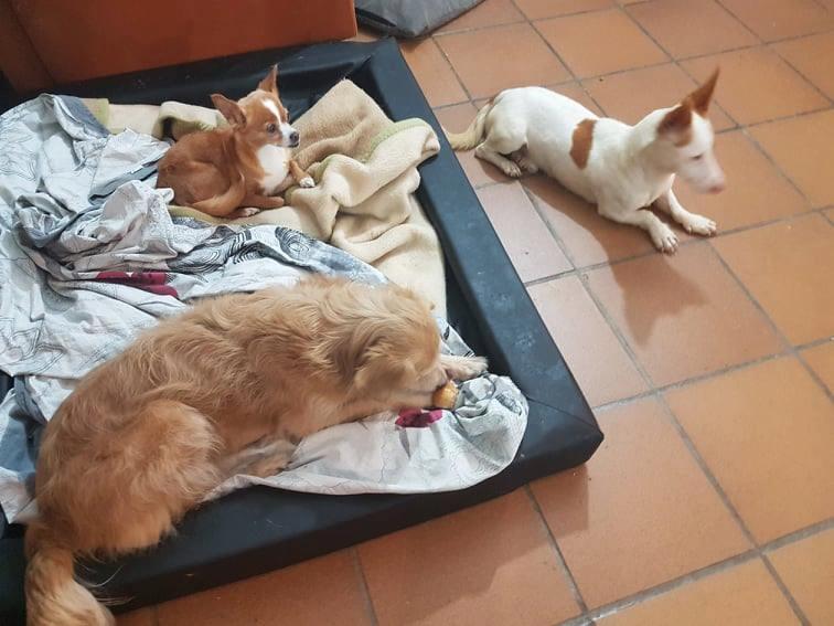 Kleine hond van de straat gehaald - Duna Lupita19