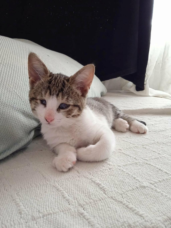 5 kittens Mini12