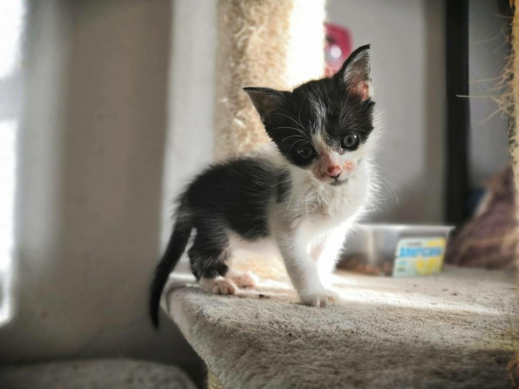 Kleine kitten (Paolo) gevonden Paolo10