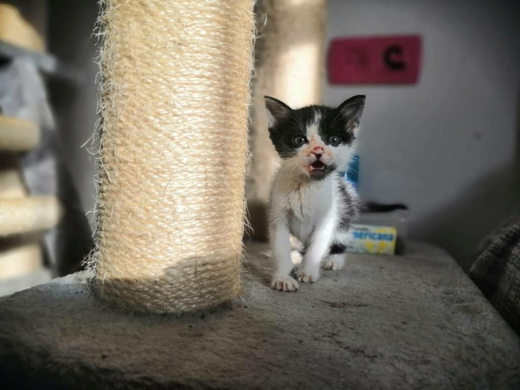 Kleine kitten (Paolo) gevonden Paolo110