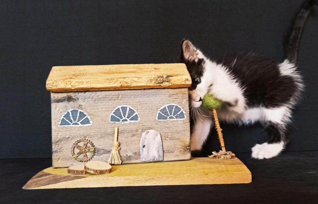 Kleine kitten (Paolo) gevonden Paolo111