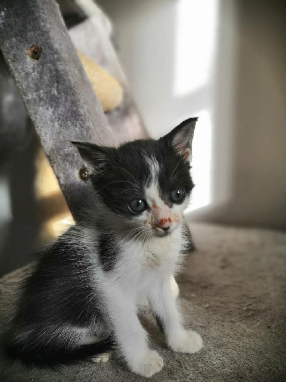 Kleine kitten (Paolo) gevonden Paolo210