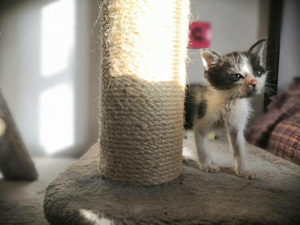 Kleine kitten (Paolo) gevonden Paolo310
