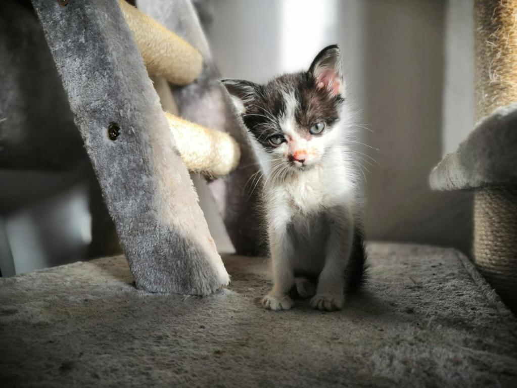 Kleine kitten (Paolo) gevonden Paolo410