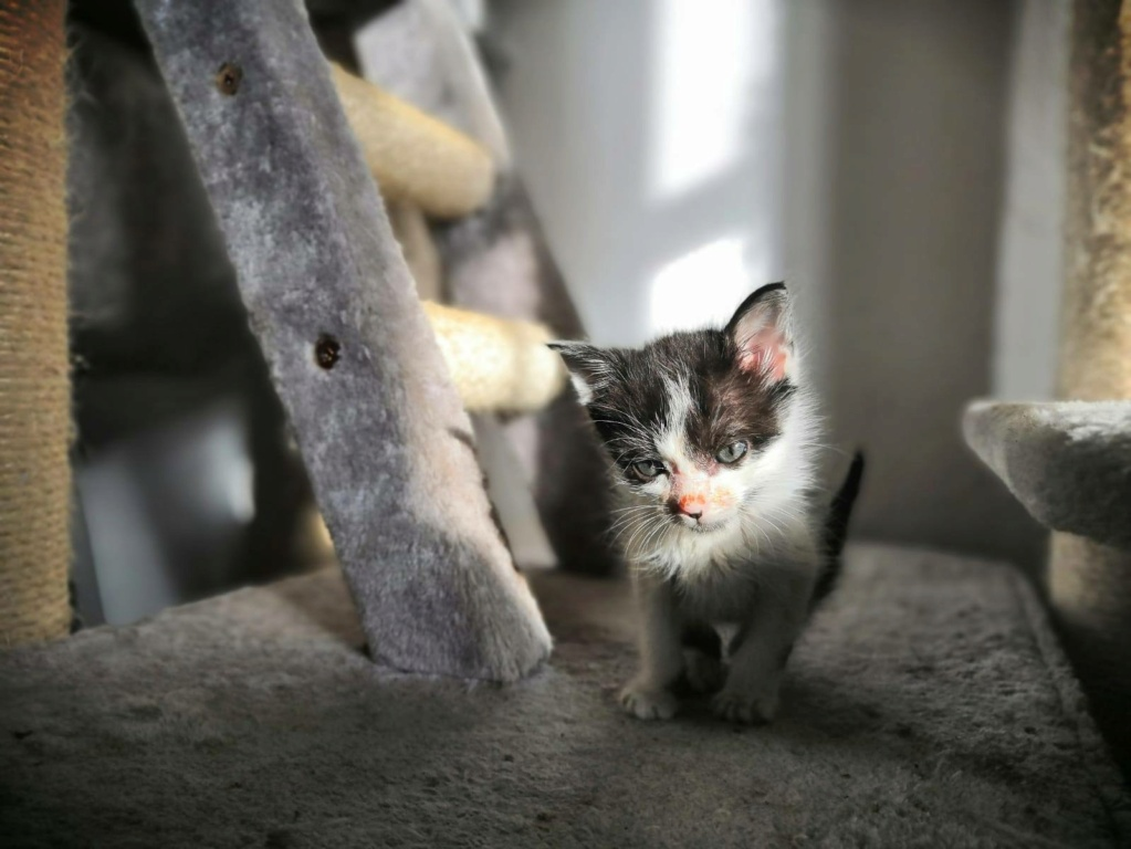 Kleine kitten (Paolo) gevonden Paolo510