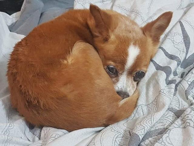Kleine hond van de straat gehaald - Duna Receiv21