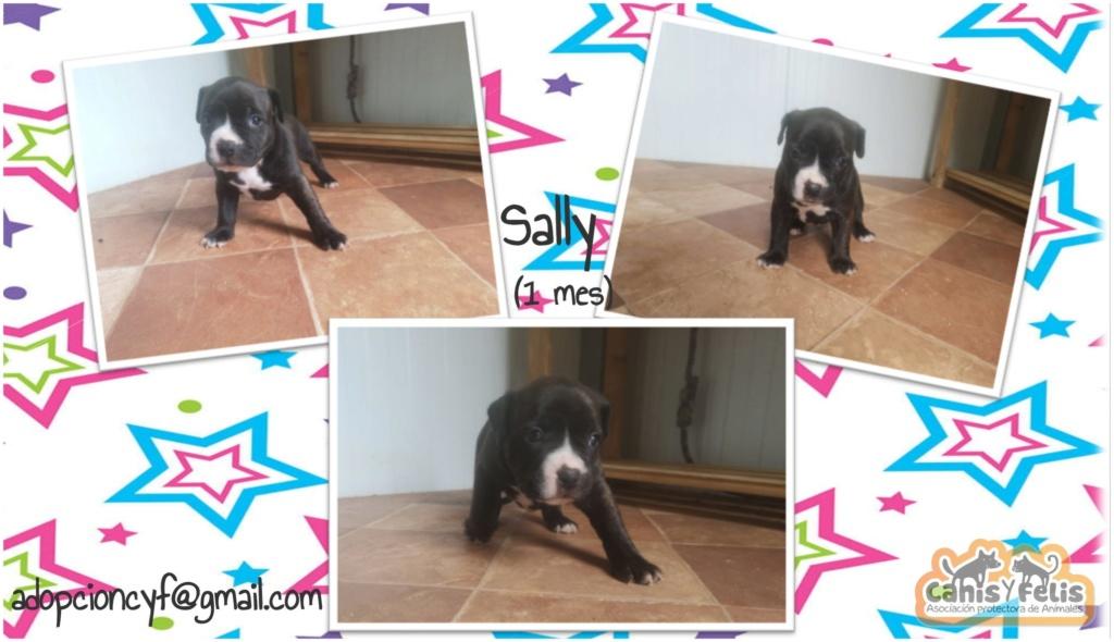 Frida zwanger achtergelaten bij de poort van Canis y Felis Sally10