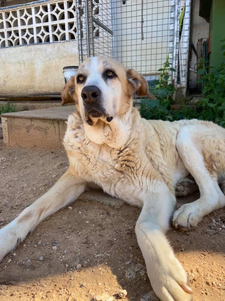 Canis Thor(Gedeeltelijke adoptie) Thor113