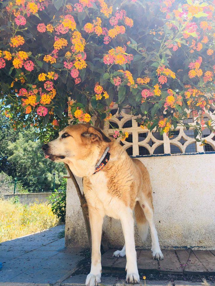 Canis Thor(Gedeeltelijke adoptie) Thor116