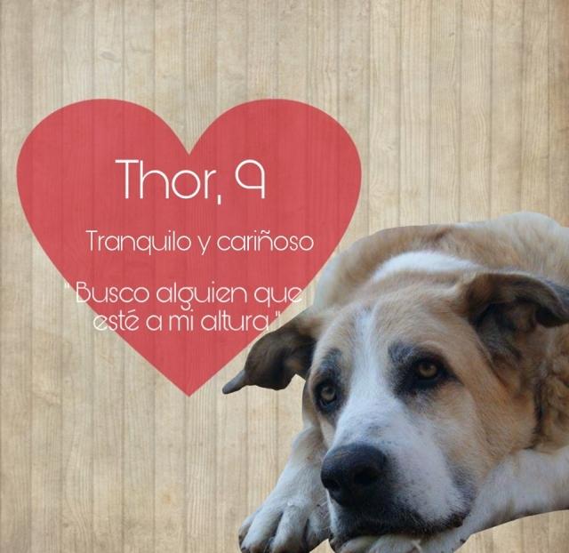 Canis Thor(Gedeeltelijke adoptie) Thor14
